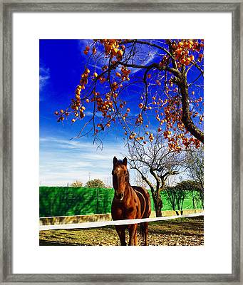 Horse Framed Print by Niki Mastromonaco