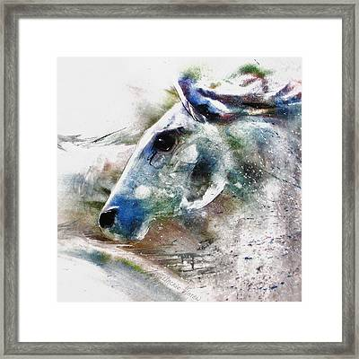Horse Of Color Framed Print
