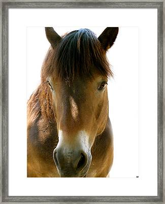 Horse Of Course Framed Print by Debra     Vatalaro