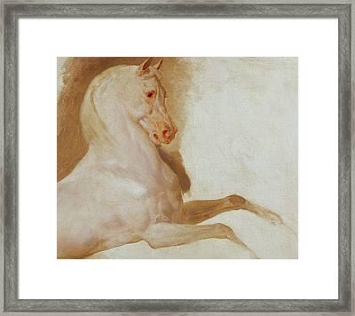 Horse Of Joachim Murat Framed Print by Baron Antoine Jean Gros