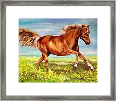 Horse On A Field  Framed Print by Olga Koval
