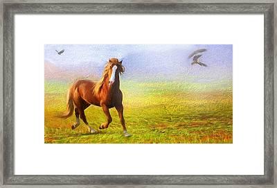Horse On The Prairie Framed Print
