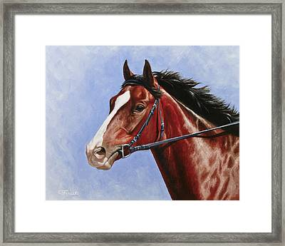 Horse Painting - Determination Framed Print by Crista Forest