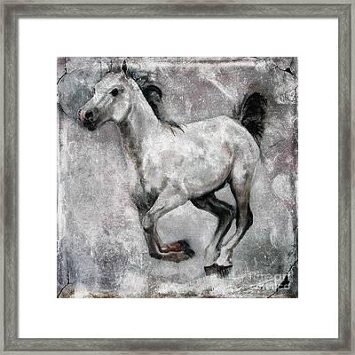 Horse Painting Stallion Lipizzaner Framed Print