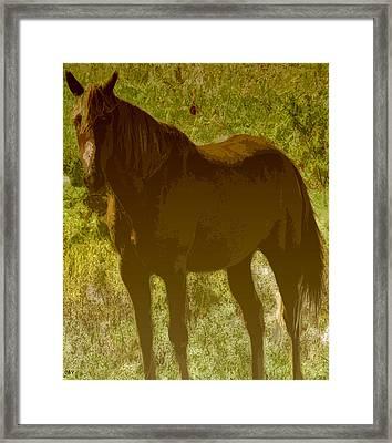 Horse Patch Framed Print by Debra     Vatalaro