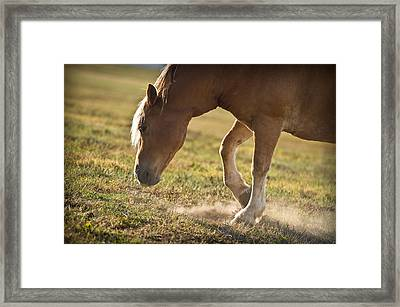 Horse Pawing In Pasture Framed Print