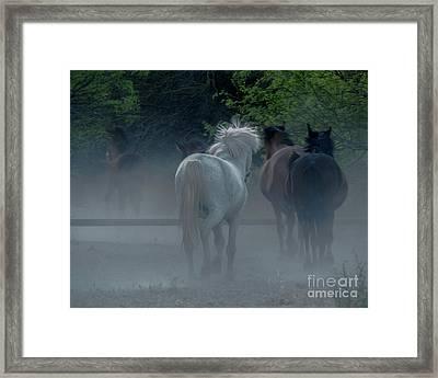 Horse 8 Framed Print