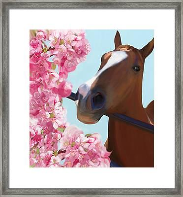 Horse Pink Blossoms Framed Print