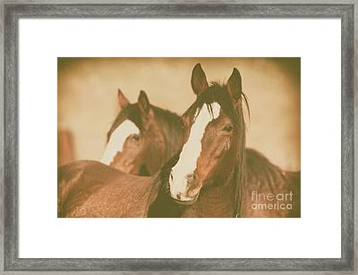 Framed Print featuring the photograph Horse Portrait by Ana V Ramirez