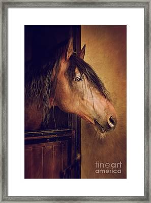 Horse Portrait Framed Print by Carlos Caetano