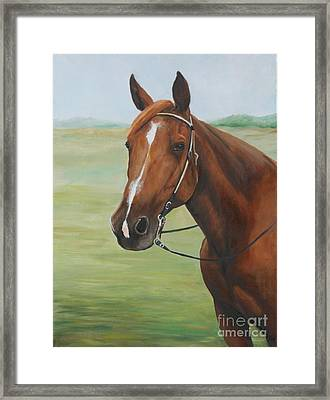 Horse Portrait Framed Print by Charlotte Yealey