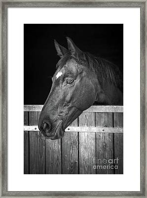 Horse Portrait Framed Print by Delphimages Photo Creations