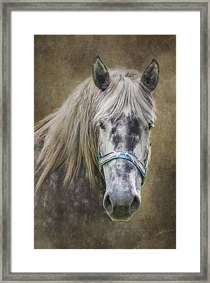 Horse Portrait I Framed Print by Tom Mc Nemar