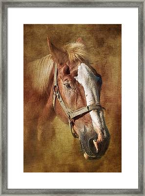 Horse Portrait II Framed Print by Tom Mc Nemar