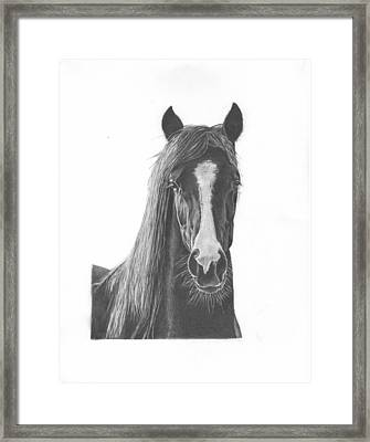 Horse Portrait Framed Print by Sue Olson