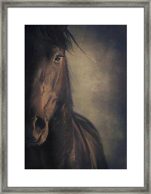 Horse Portrait Framed Print by Wolf Shadow  Photography