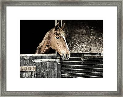 Framed Print featuring the photograph Horse Profile In The Stable by Marion McCristall