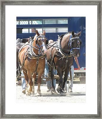 Horse Pull J Framed Print by Melissa Parks