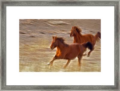 Horse Race Framed Print by James Steele