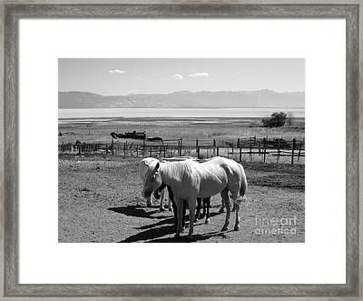 Horse Ranch Framed Print by Lisa Schafer