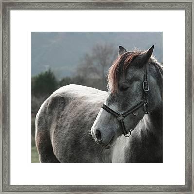 Horse Framed Print by Saulgranda