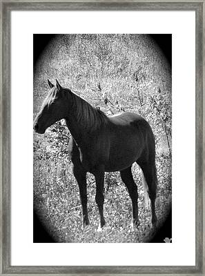 Horse Scope Framed Print by Debra     Vatalaro