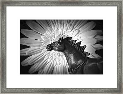 Horse Startled By A Daisy Framed Print by Jeff  Gettis