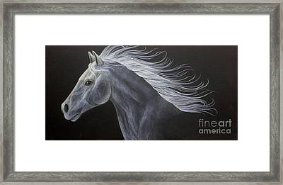 Horse Framed Print by Susan Clausen