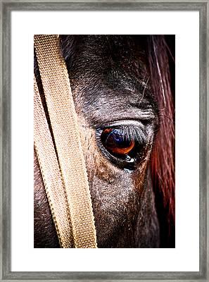 Horse Tears Framed Print