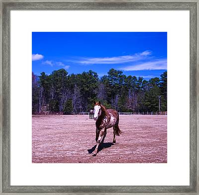 Horse Trotting In Framed Print