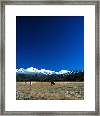 Horse Valley Framed Print