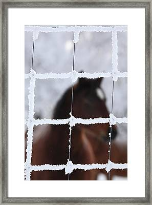 Horse Viewed Through Frost Covered Fence Framed Print