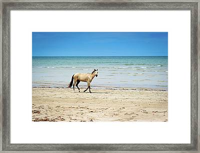Horse Walking On Beach Framed Print