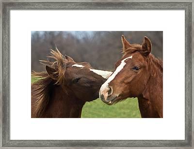 Horse Whisperer Framed Print by Mamie Thornbrue