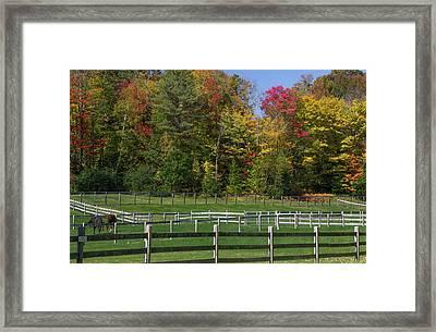 Horse'n Around Framed Print by Jim LaMorder
