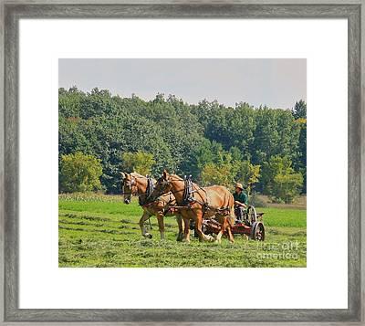 Horsen Around Framed Print by Robert Pearson