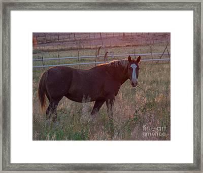 Horses 2 Framed Print