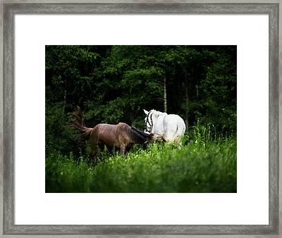 Horses 2 Framed Print by Ivan Vukelic