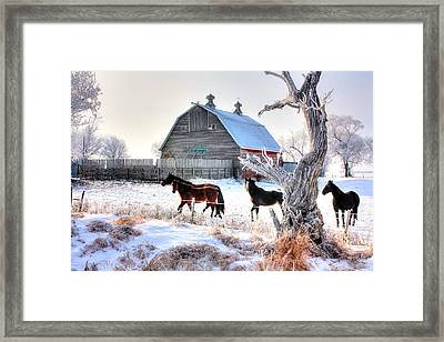 Horses And Barn Framed Print