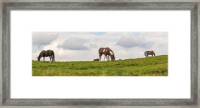 Horses And Clouds Framed Print