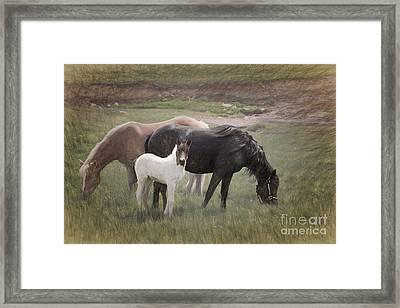 Horses And Colt  Framed Print