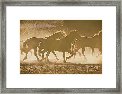 Framed Print featuring the photograph Horses And Dust by Ana V Ramirez