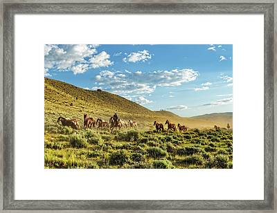 Horses And More Horses Framed Print