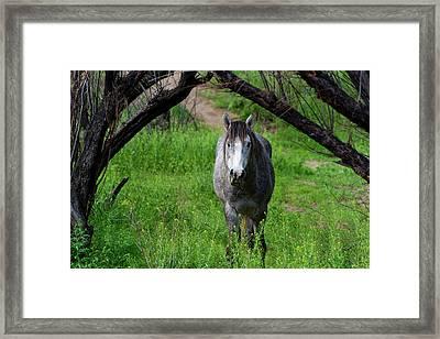 Horse's Arch Framed Print