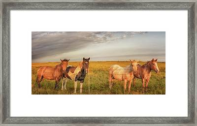 Framed Print featuring the photograph Horses At Kalae by Susan Rissi Tregoning