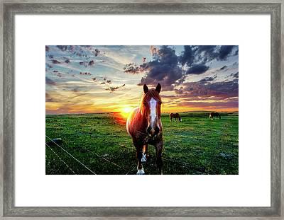 Horses At Sunset Framed Print