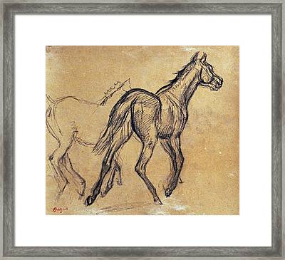 Horses Framed Print by Celestial Images