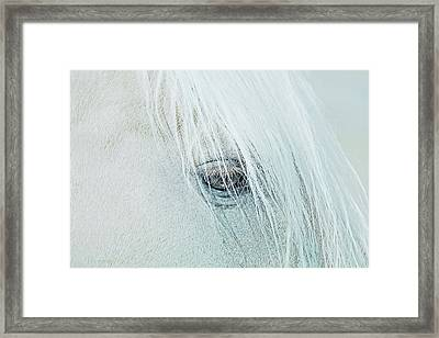Horse's Eye Portrait Framed Print by Jennie Marie Schell
