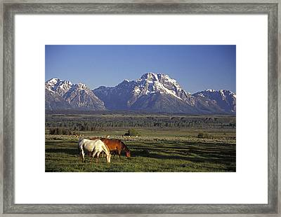 Horses Graze At Lost Creek Ranch Framed Print by Richard Nowitz