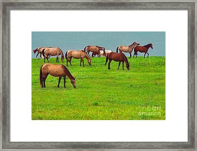Horses Graze By Seaside Framed Print by Thomas R Fletcher